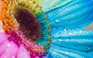 Краска для цветов: разновидности и способы покраски