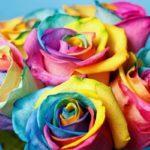 Красим розу своими руками в нужный цвет