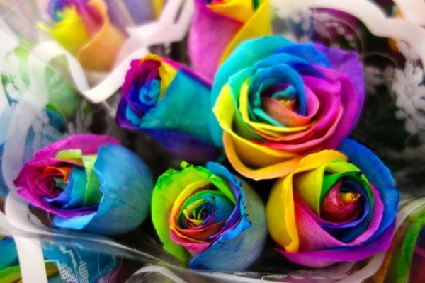 Разноцветные розы.