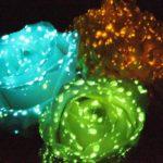 Светящийся краситель для цветов