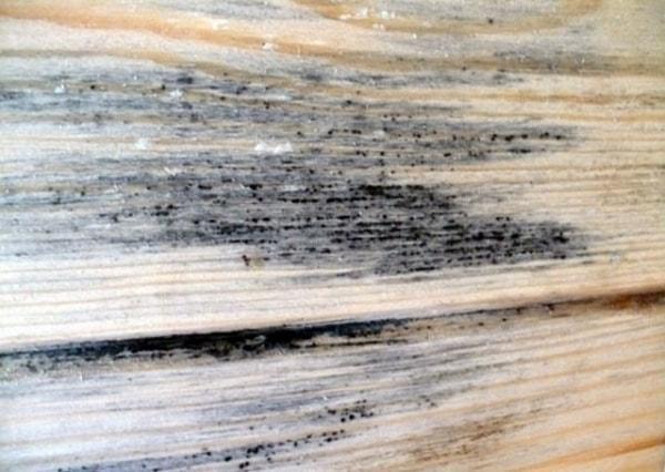 Проявление плесени на древесине