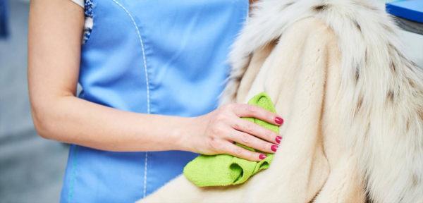Перед окрашиванием важно тщательно очистить шубу