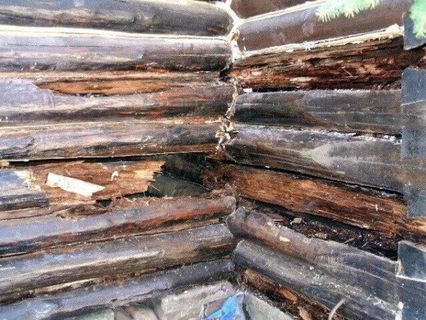 Покраска защитит древесину от разрушения и насекомых